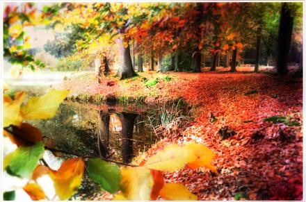 herfst ..