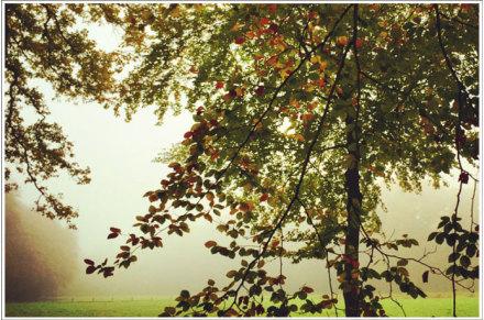 misty ..