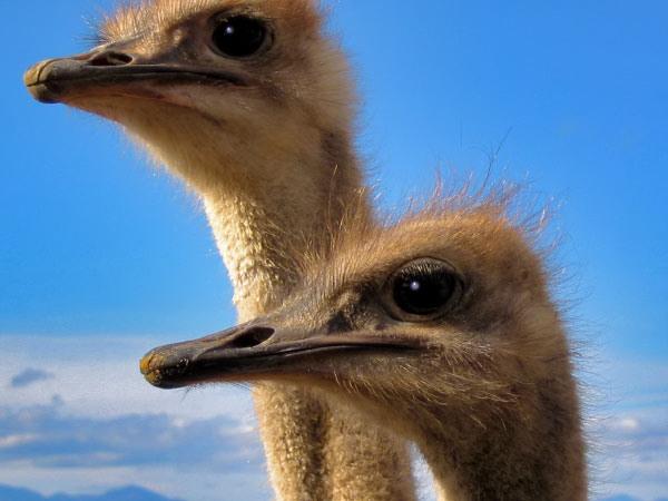 Vreemde vogels...