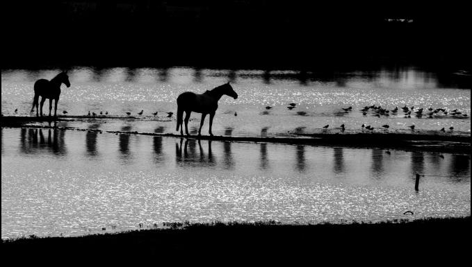 Dark Horses...
