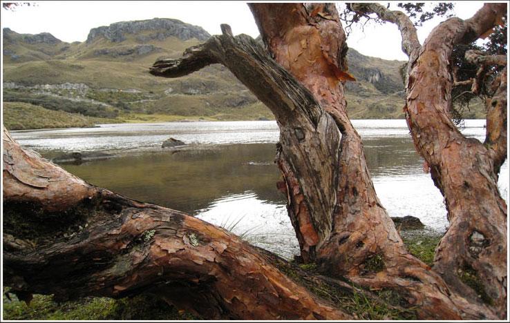 The Parque Nacional Cajas ..